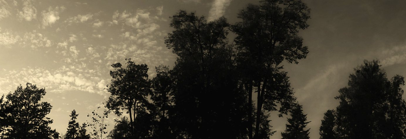 Stromy a oblaka - panorama