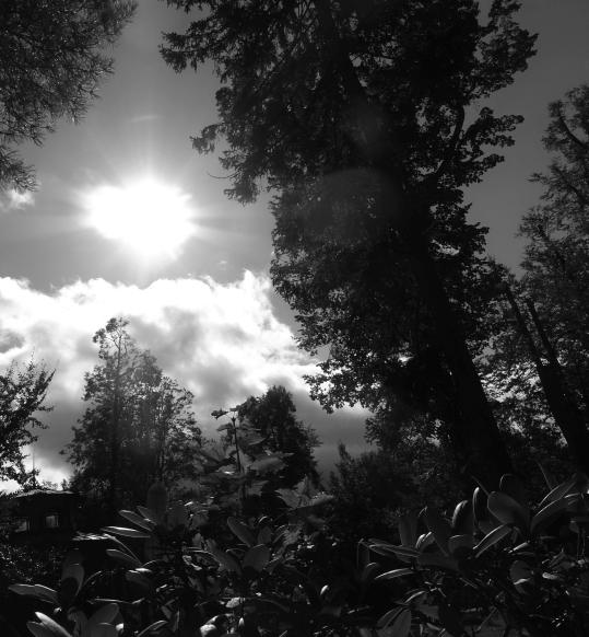 Slunce nad loukou