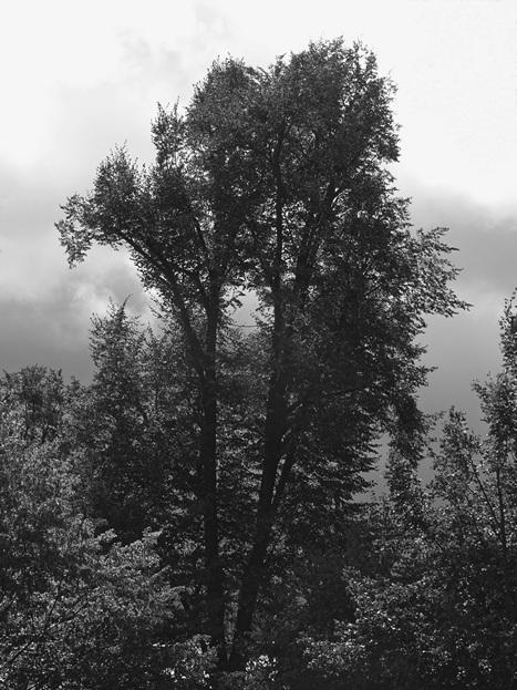 Dvojitý strom