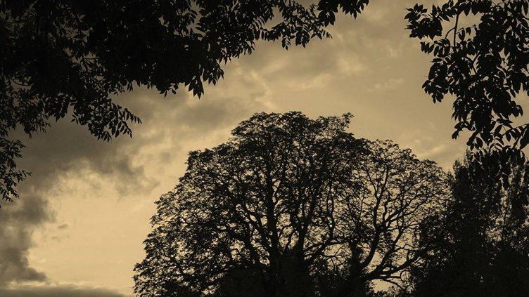 Stromová krajka