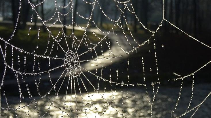 Podzimní pavučina
